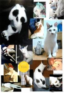 ito-junjis-cat-diary-2250553